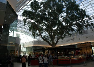 Burnside_Village_Shopping_Centre (4)